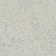 Seashell 3428