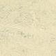 White Birch 3050
